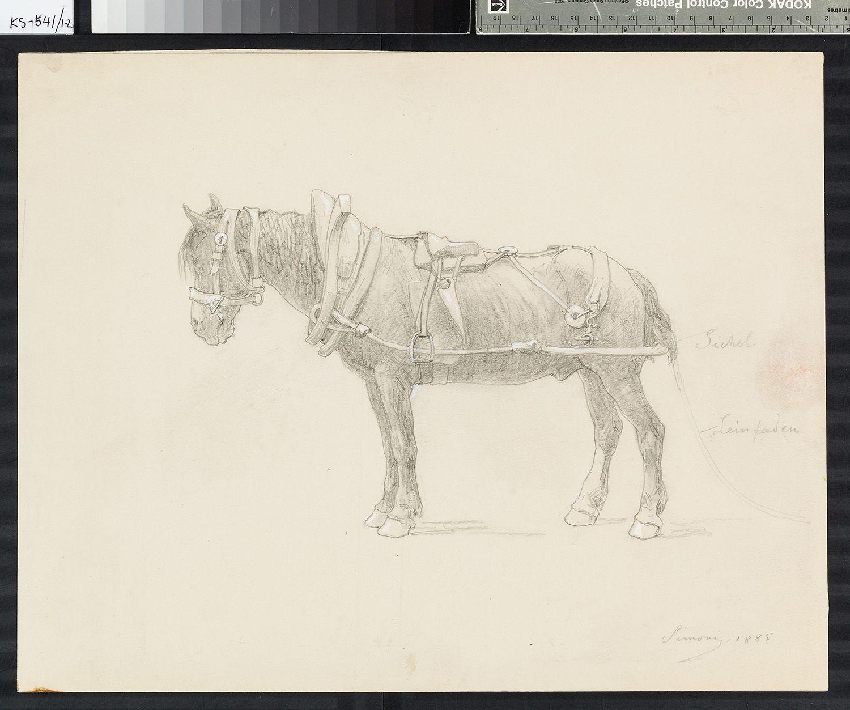 geschirrtes Pferd