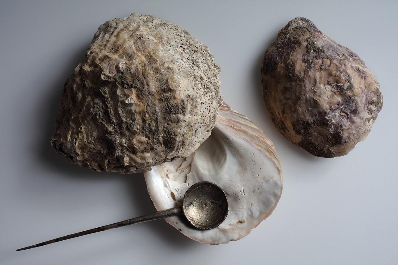 Austernklappen